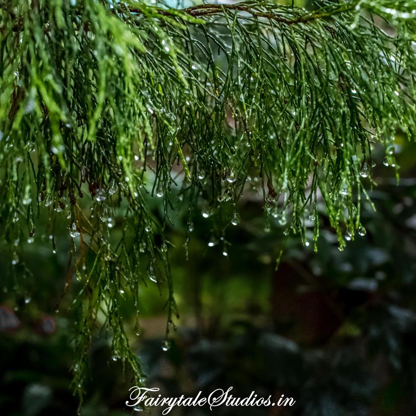 Nature_Fern Creek Kodaikanal_Fairytale Travels (7)