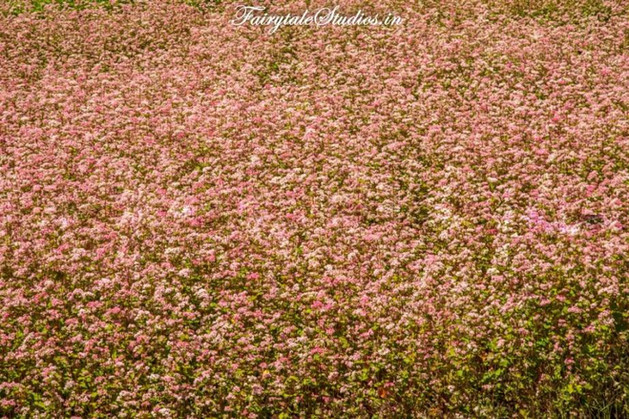 Kinnaur Valley_Fairytale Travel Blog (40