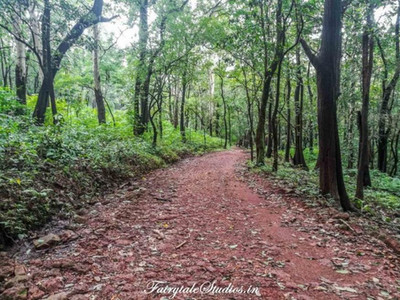 Forest Trek_Dudhsagar Waterfalls, Goa - India