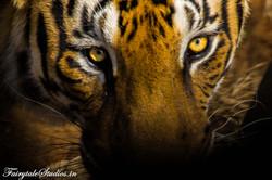 Animal/Wildlife Photography
