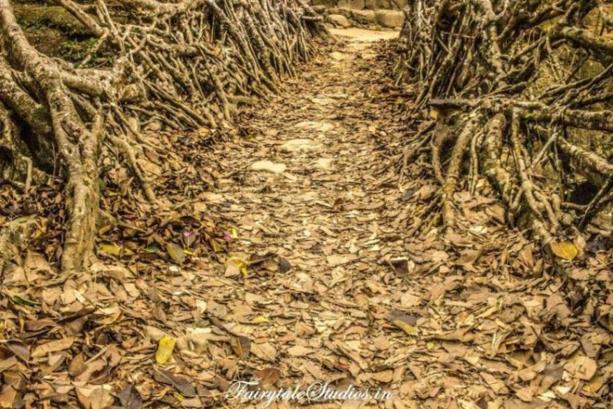 Riwai Living Root Bridge_Mawlynnong_The Meghalaya Odyssey_Fairytale Travel Blogs (9)