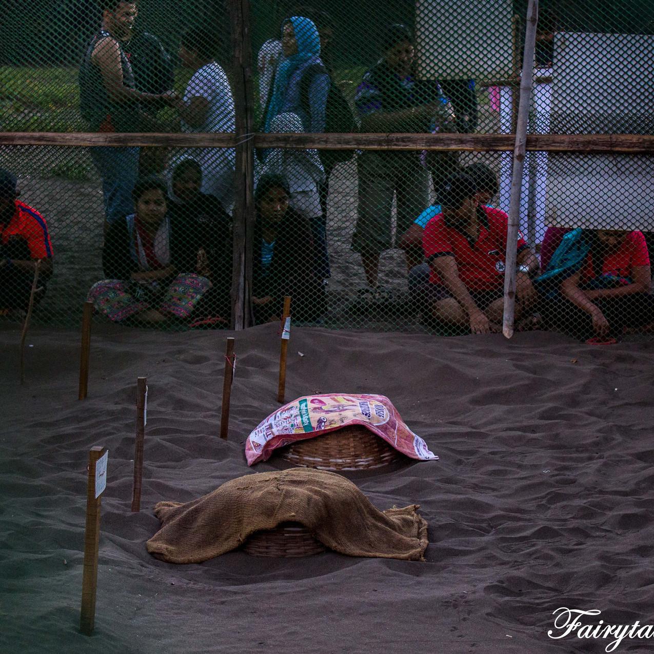 Turtle Festival_Velas_2