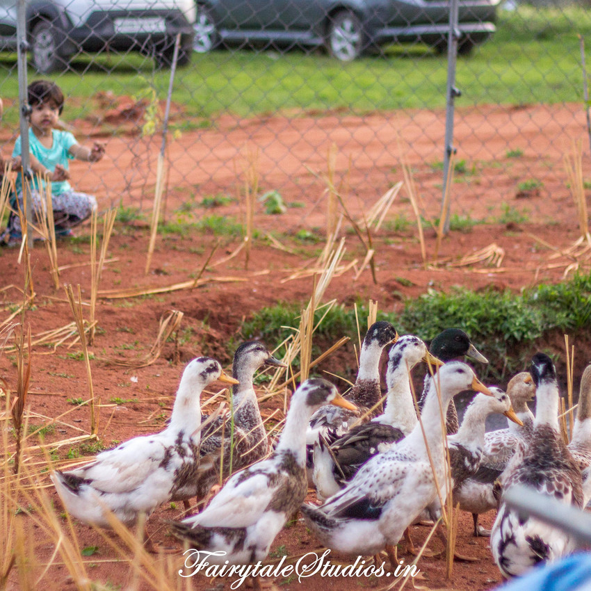Fairytale Travels_Sids Farm (104)