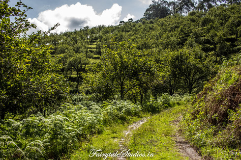 Trek_Pear County Kodaikanal_Fairytale Travels (20)