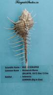 Seashell Museum_Mahabalipuram_Fairytale Travel Blog (16)