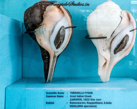 Seashell Museum_Mahabalipuram_Fairytale Travel Blog (2)