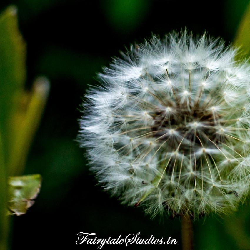 Nature_Fern Creek Kodaikanal_Fairytale Travels (6)