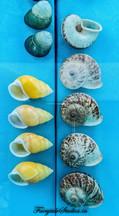 Seashell Museum_Mahabalipuram_Fairytale Travel Blog (9)