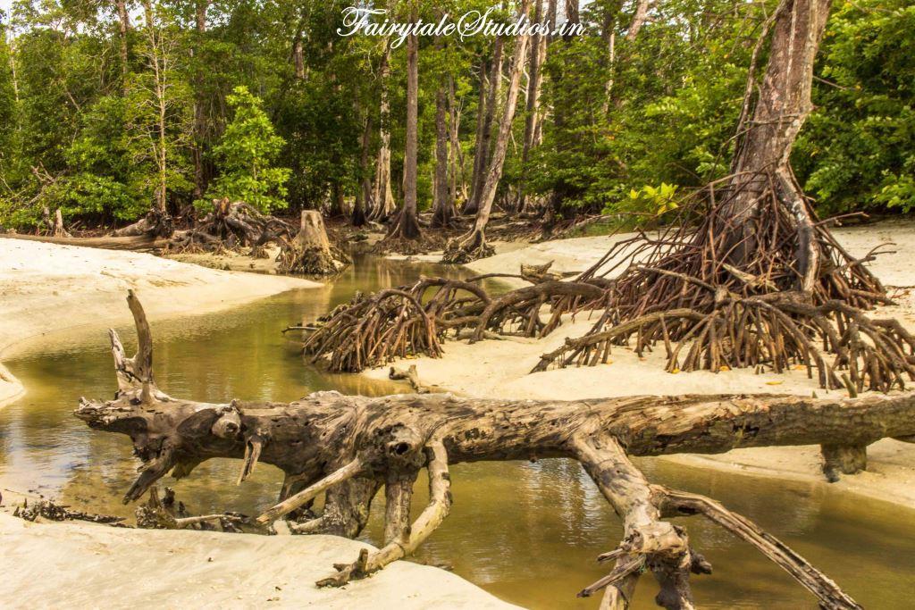 Elephant Beach_Havelock island_The Andaman Odyssey_Fairytale Travels (5)