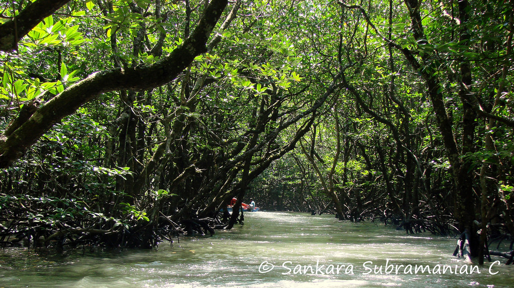 Boating through mangrove forest at Baratang island_The Andaman Odyssey_Fairytale Travels