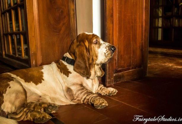 Dogs_Vivenda Dos Palhacos_Majorda_Offbea