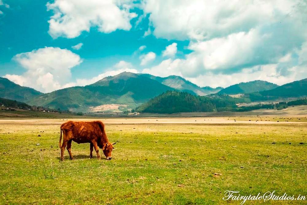 The Phobjikha valley in Phobjikha, Bhutan_Plan your trip to Bhutan_The Bhutan Odyssey