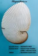 Seashell Museum_Mahabalipuram_Fairytale Travel Blog (18)