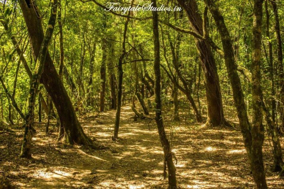 Mawphlang sacred forest_The Meghalaya Odyssey_Fairytale Travel Blogs