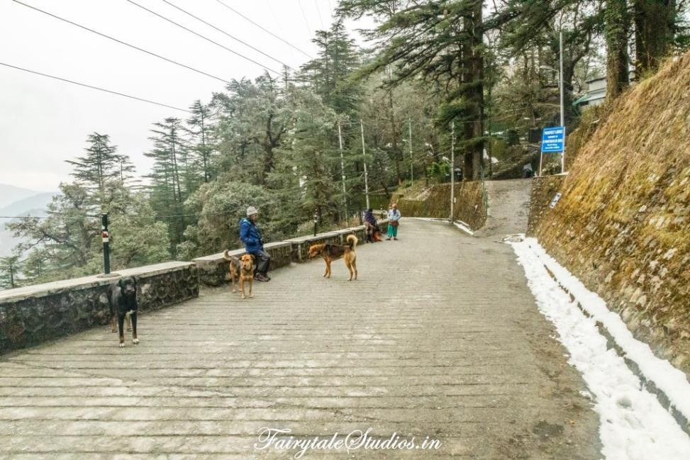 The friendly dogs that accompanied us everywhere we went in Landour, Uttarakhand - India