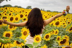 Sunflower Fields - A Photoblog