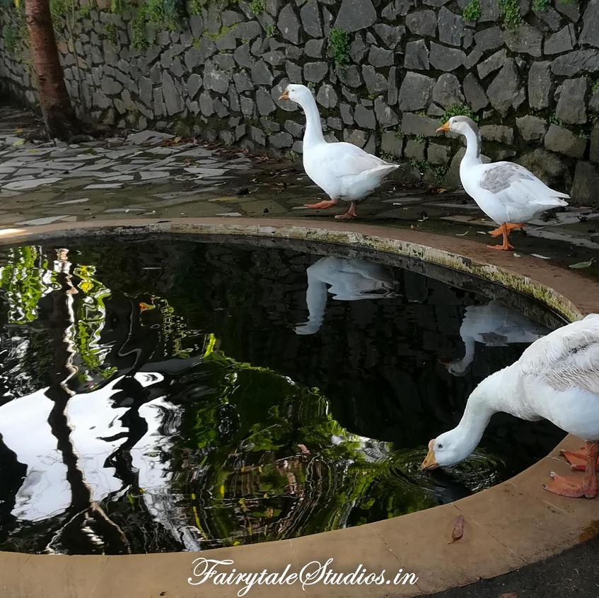 Garden_The Carlton Kodaikanal_Fairytale Travels (2)