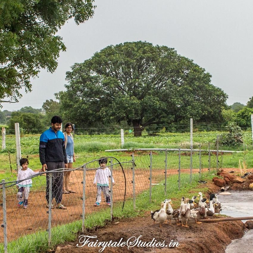 Fairytale Travels_Sids Farm (141)