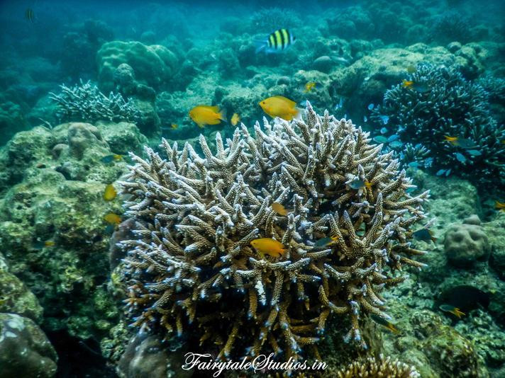 Beautiful and colorful world of corals seen while Scuba diving