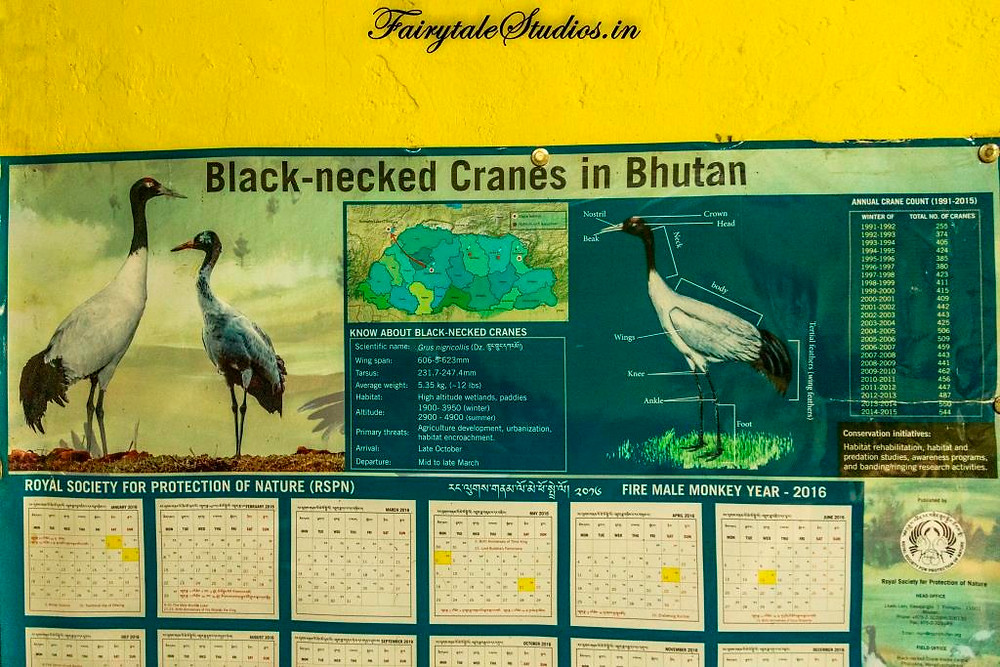 An old poster cum calendar showing black necked cranes at our homestay in Phobjikha or Gangtey Valley, Bhutan