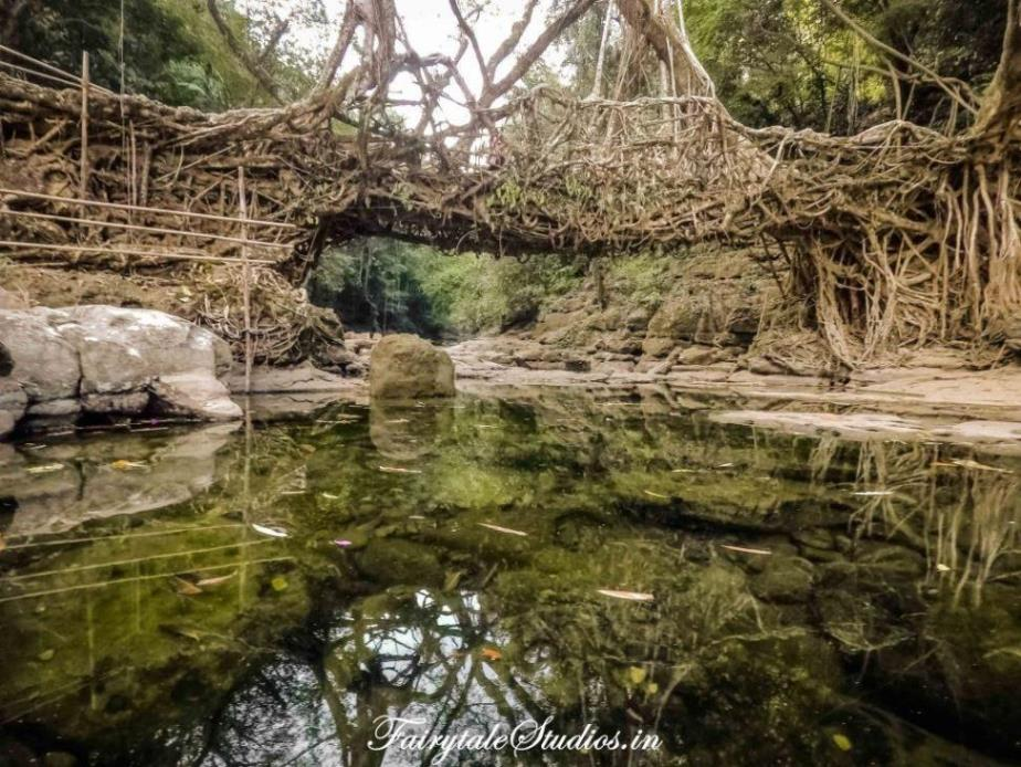 Riwai Living Root Bridge_Mawlynnong_The Meghalaya Odyssey_Fairytale Travel Blogs (2)
