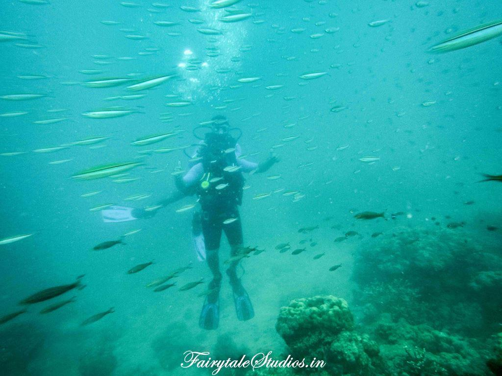 Under water_Scubalov_The Andaman Odyssey_Fairytale Travels (38)