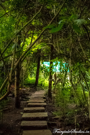 Gardens_Fern Creek Kodaikanal_Fairytale Travels (26)