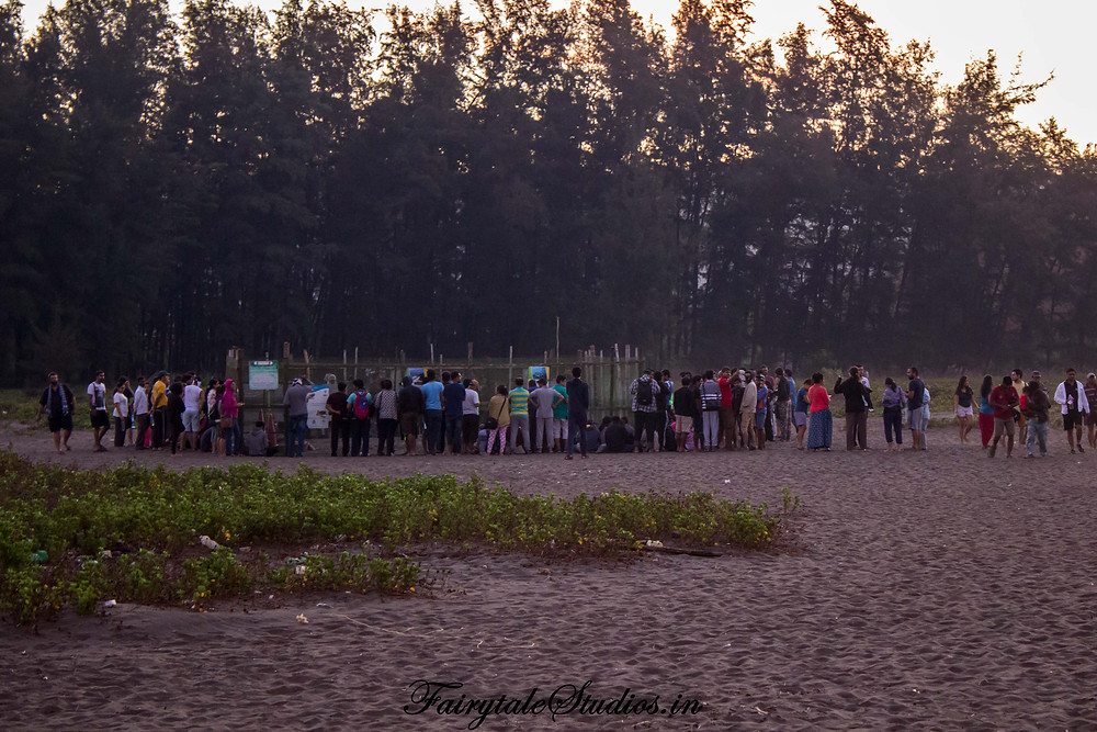 The crowd gathered near the barricaded conserved area on Velas beach, India during the Turtle festival