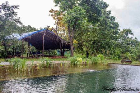 Swimming Pool_Dudhsagar Plantation Spice