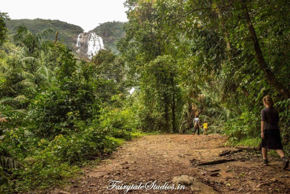 First glimpse of Dudhsagar falls while trekking through forest, Goa - India