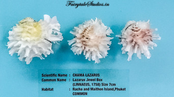 Seashell Museum_Mahabalipuram_Fairytale Travel Blog (17)