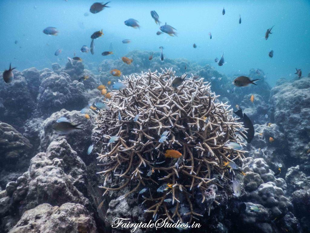 Under water_Scubalov_The Andaman Odyssey_Fairytale Travels (34)