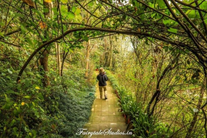 Walkway going downwards amidst nature towards Walterre, Dehradun