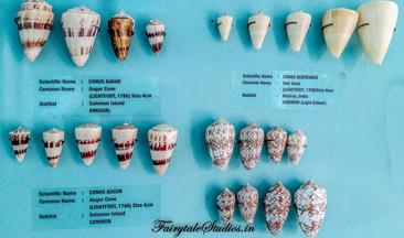 Seashell Museum_Mahabalipuram_Fairytale Travel Blog (6)