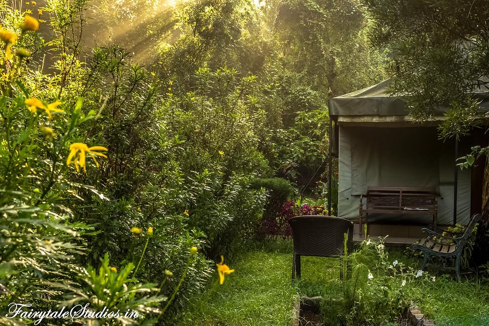 Sun rays finding their way through thick green trees Beautiful yellow night lamps @ The Fern Creek, Kodaikanal, India