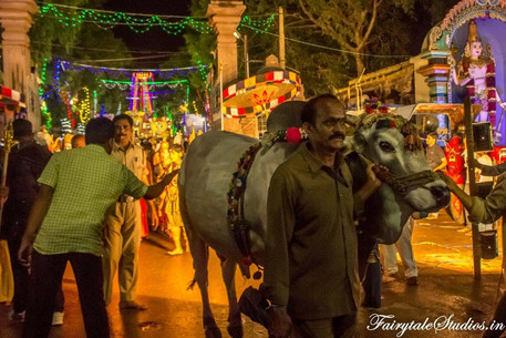 The holy cow is part of the Dussehra carnival as people try to touch it and seek blessings. Cow is considered holy as per Hindu religion