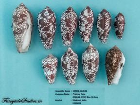 Seashell Museum_Mahabalipuram_Fairytale Travel Blog (4)