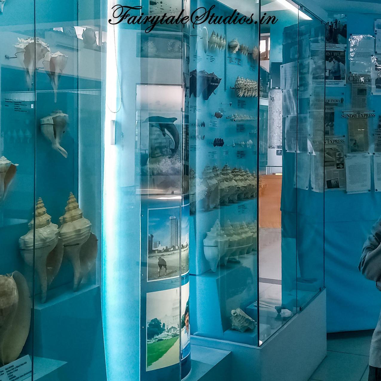 Seashell Museum_Mahabalipuram_Fairytale Travel Blog (38)