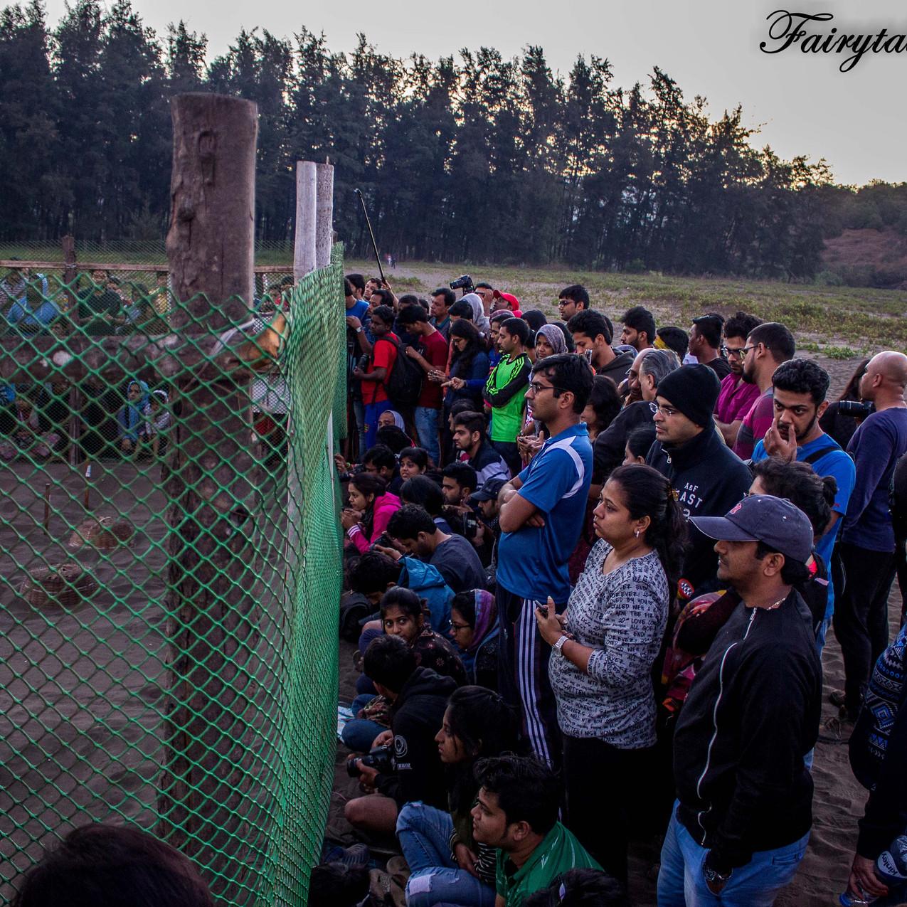 Turtle Festival_Velas_1