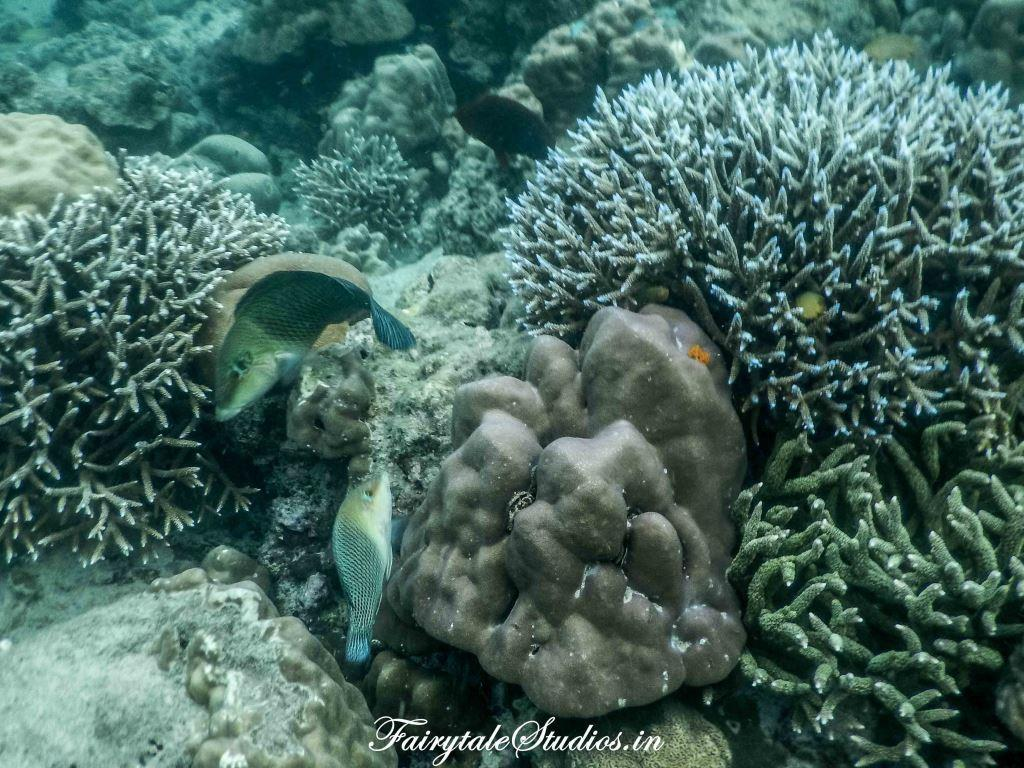 Under water_Scubalov_The Andaman Odyssey_Fairytale Travels (24)