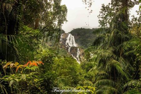 River_Dudhsagar Waterfalls_offbeat Goa_F