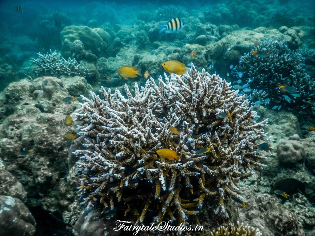 Under water_Scubalov_The Andaman Odyssey_Fairytale Travels (44)