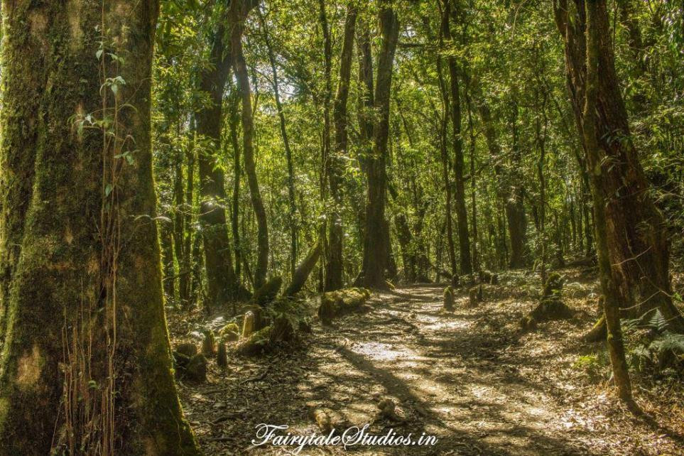 Walking inside Mawphlang Sacred Grove Forest