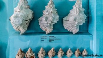 Seashell Museum_Mahabalipuram_Fairytale Travel Blog (21)