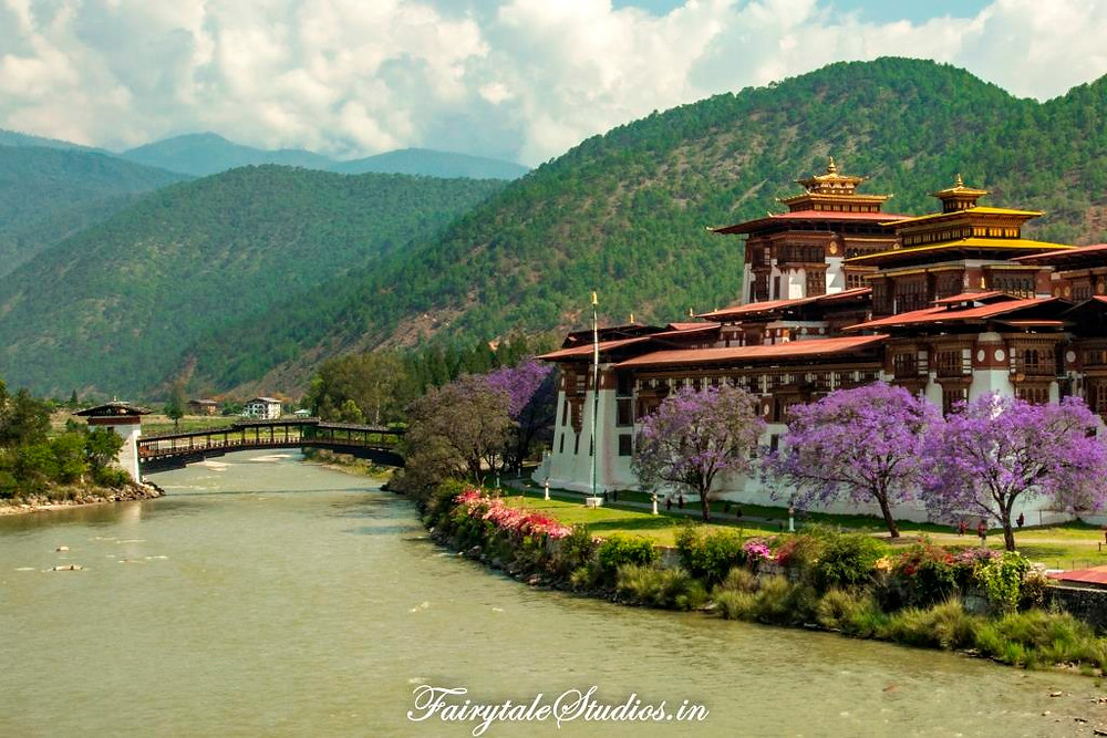Punakha Dzong surrounded by blooming jacaranda trees, Punakha - Bhutan