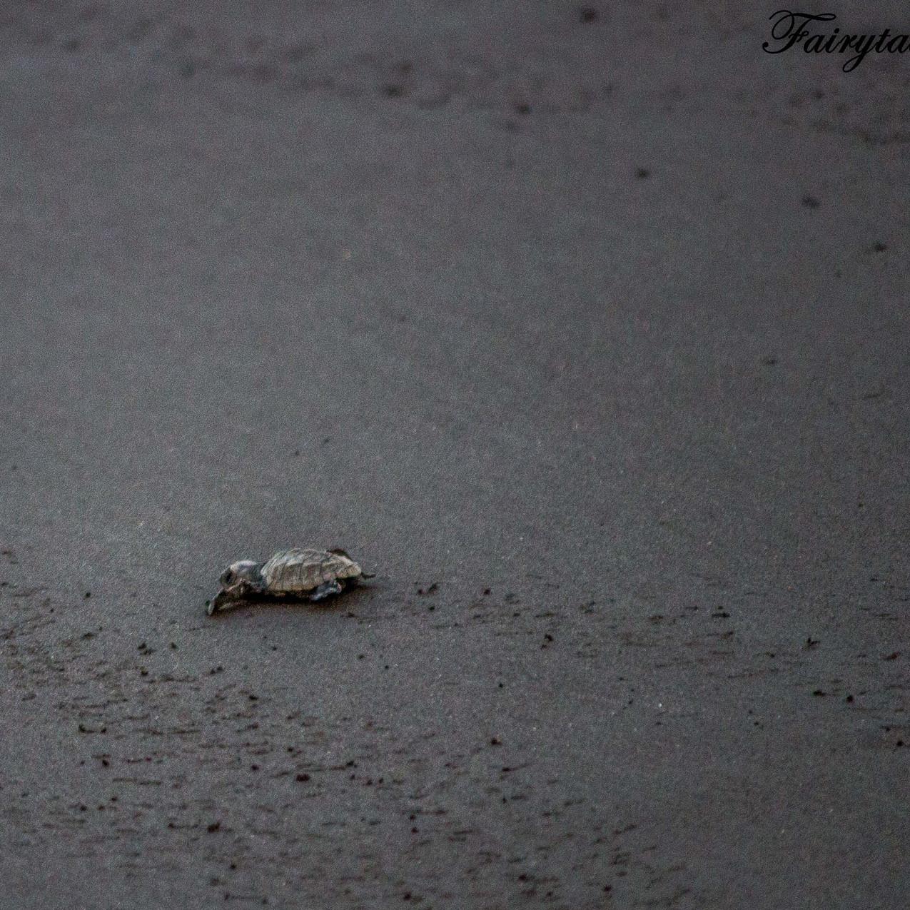 Turtle Festival_Velas_9