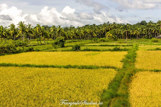 Summer Sand_Neil Island_The Andaman Odyssey_Fairytale Travels (2)