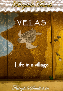 Velas is a small village below mumbai coast mainly famous for Olive ridley turtles who come here to lay eggs. Read our blog on life in Velas