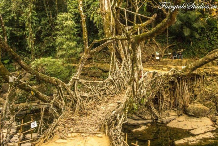 Riwai Living Root Bridge_Mawlynnong_The Meghalaya Odyssey_Fairytale Travel Blogs (13)
