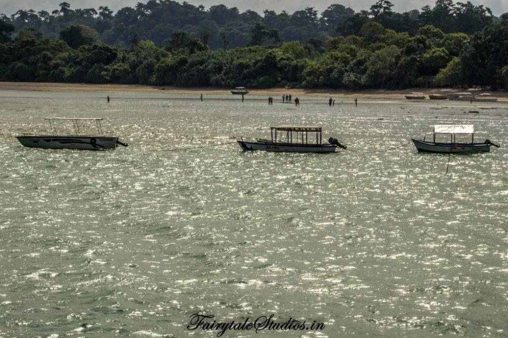 Neil Island Travel Guide_The Andaman Odyssey_Fairytale Travels (11)